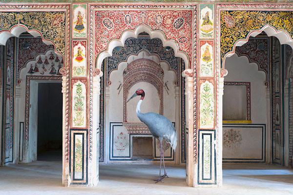 Photographer Karen Knorr, India Song series