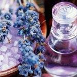 Lavender, lavender essential oil in apple cider vinegar