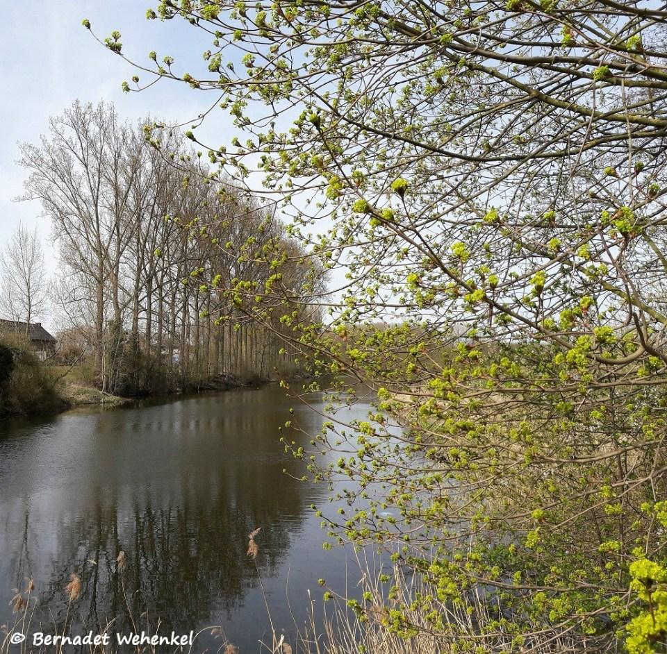 Bomen in bloei aan de Oude Maas