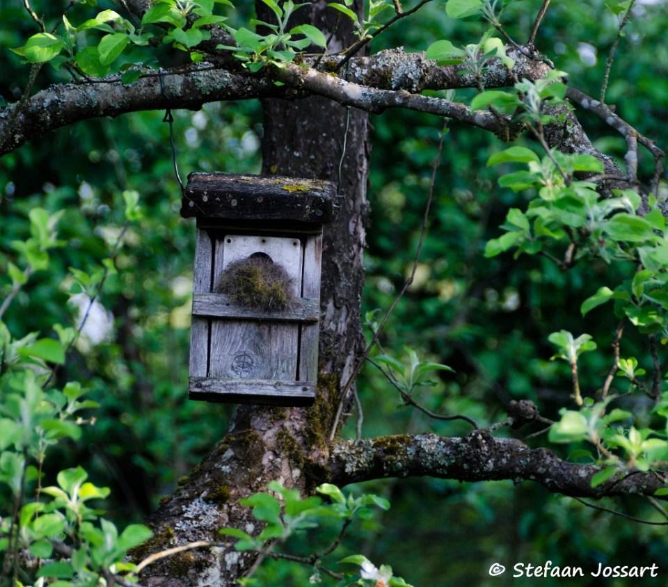 Nestkastje in boomgaard