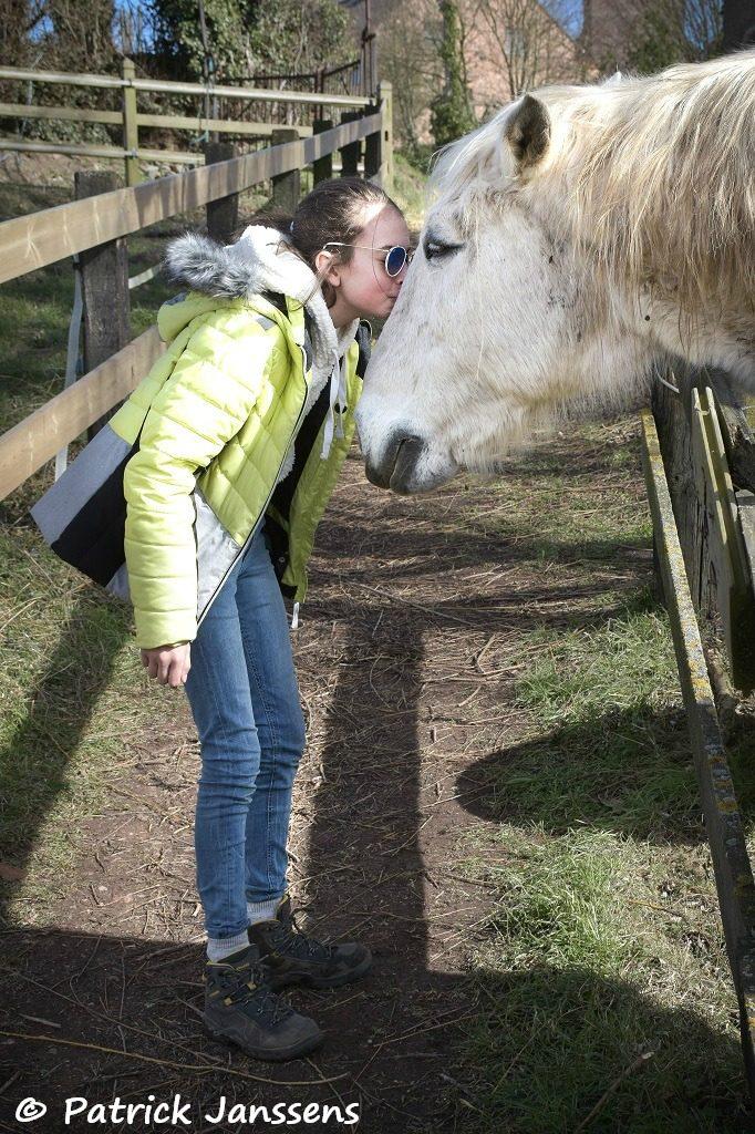 Ontmoeting met het paard
