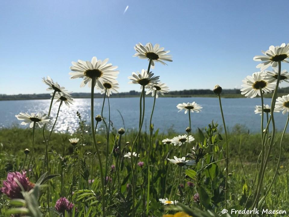 Bloemen aan het water