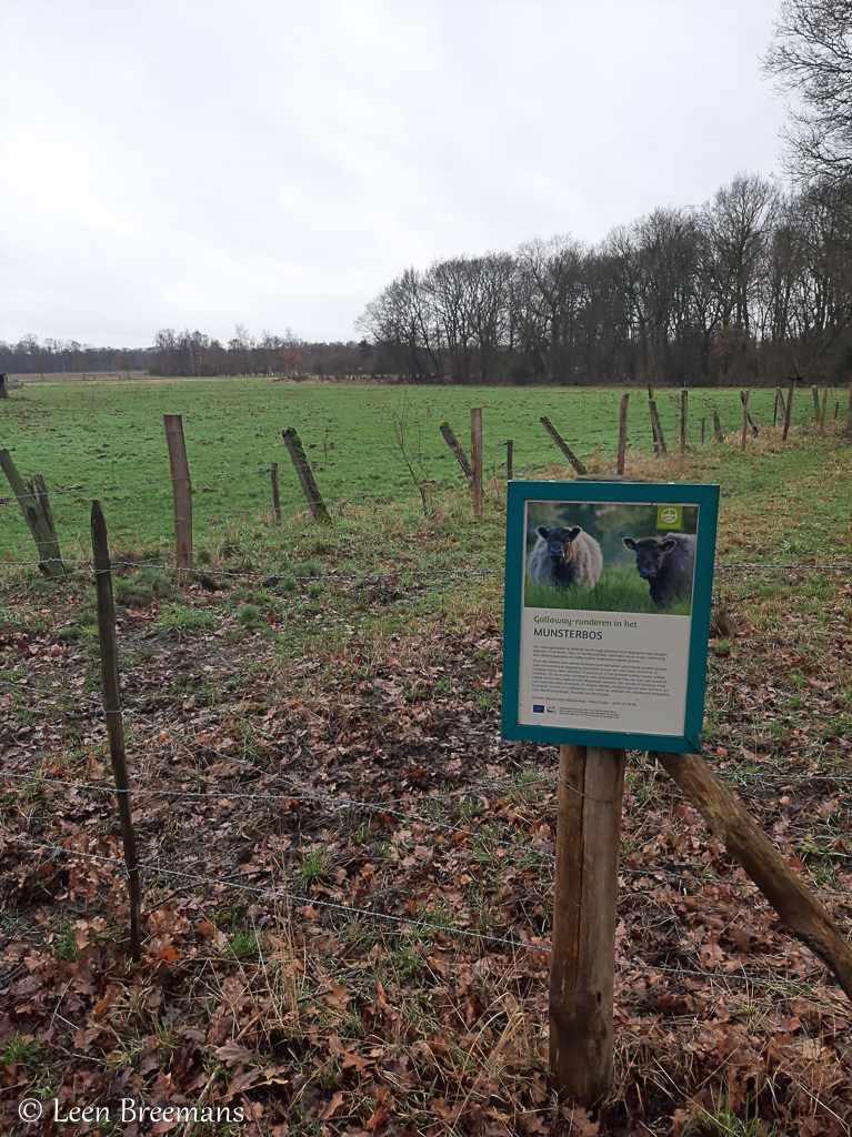 Begrazingszone Munsterbos.