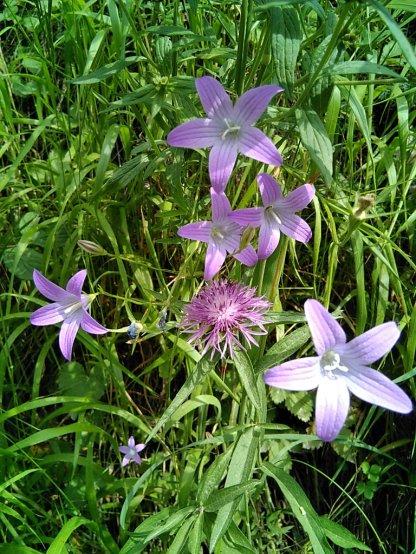 Ordesa-Flora_12