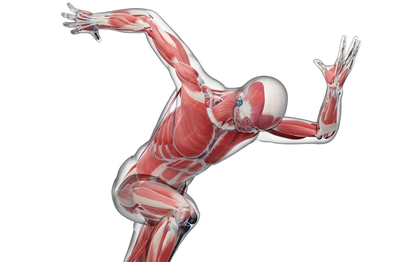 Biomechanics And Body Movement