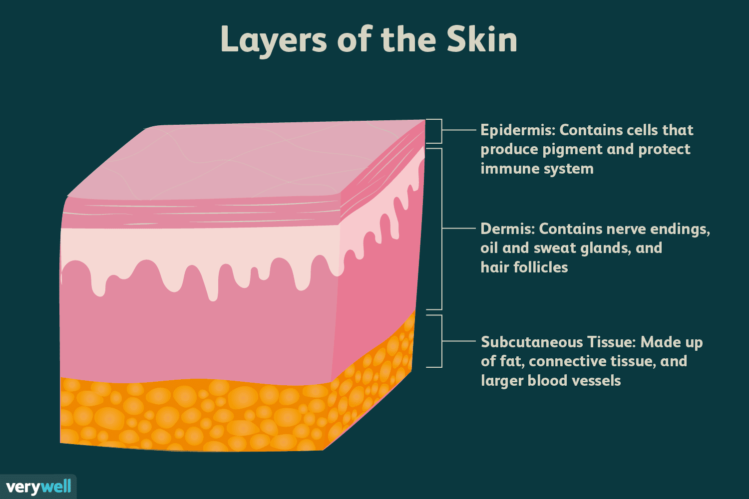 Skin Anatomy The Layers Of Skin And Their Functions