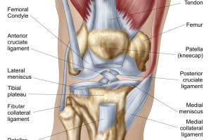 What Is Causing Your Knee Pain?