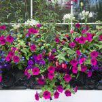 Can Choosing Certain Plants Improve Asthma