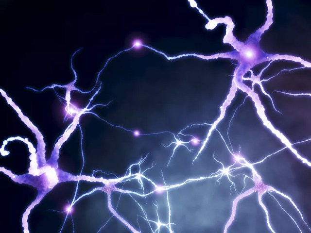 Illustration shows bright, star-like structures that are neurons and their radiating axons.