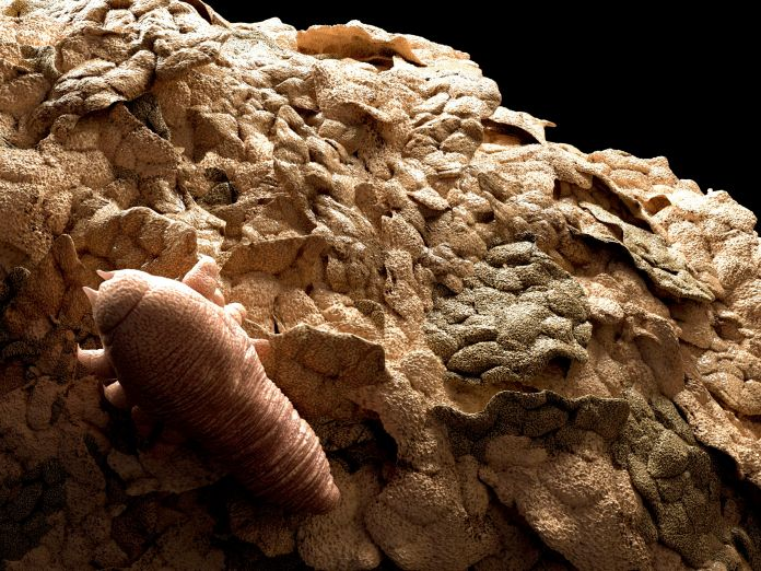 Face Mites (Demodex Folliculorum): Overview and More