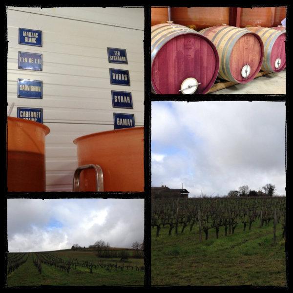 Vignes et chai - L'Enclos des Braves - Gaillac