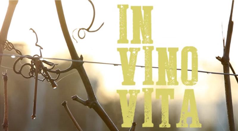 Image extraite du documentaire In Vino Vina de Samuel Meeldijk