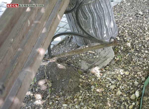 В Ботаническом саду в Кривом Роге шокированы тем, что ...