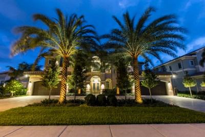Palm tree lighting