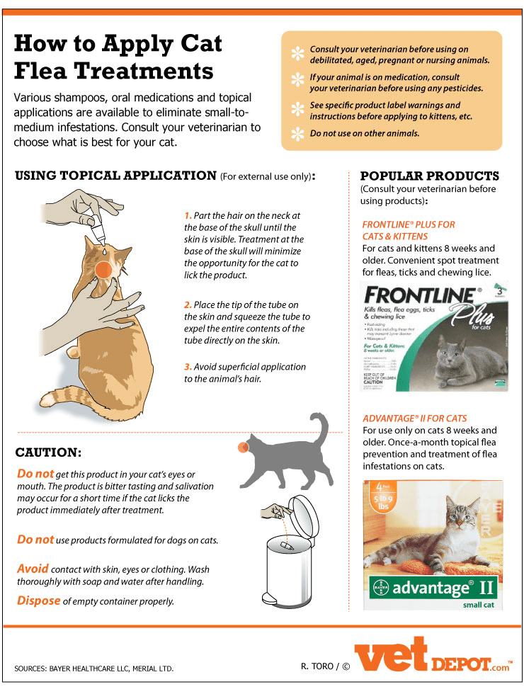 https://i1.wp.com/www.vetdepot.com/images/flea-application-cat-infographic.png