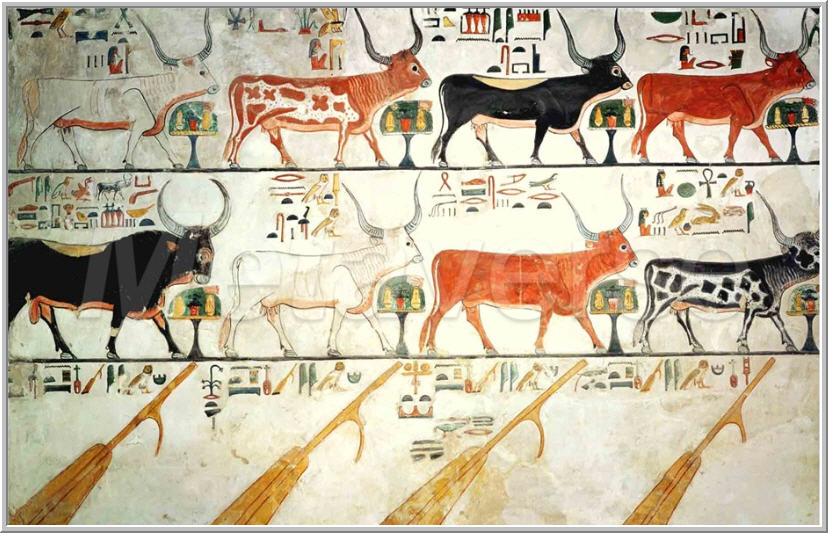 Ngito Arte - seven celestial cows and one sacred bull,