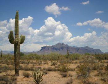 saguaro-cactus-new-mexico-the-sonoran-desert-6c72a6924778212fb550c3860c37da26