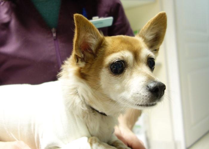 Hospitalisation à la Clinique vétérinaire des Olympiades