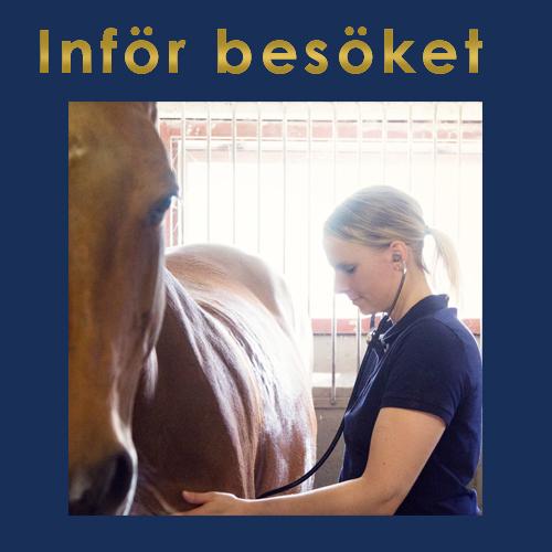 Veterinär för häst i Skåne, Malmö