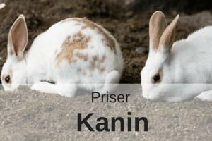 Priser Kanin
