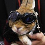 foto conejo gafas