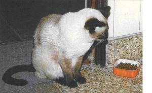 gato anorexia