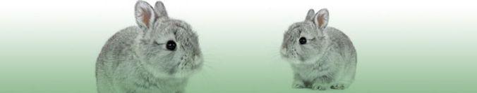 conejos cabecera