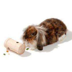 Conejo jugando