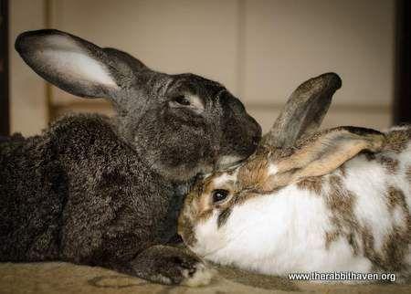 conejos y su comportamiento