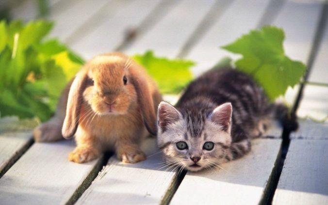 gatos y conejos