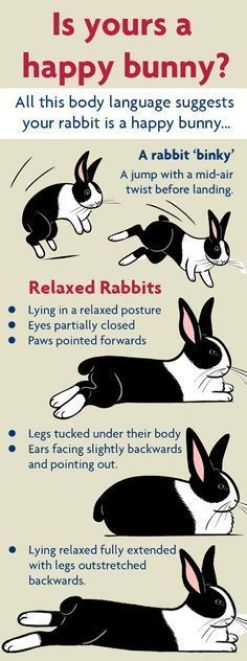 Comportamiento del conejo