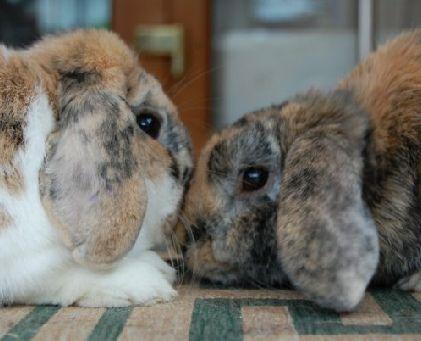 marcaje conejos
