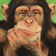 monkeythinking