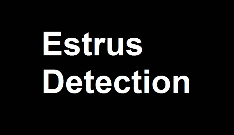 Estrus Detection In Dairy Animals By Veterinarydiscussions.net