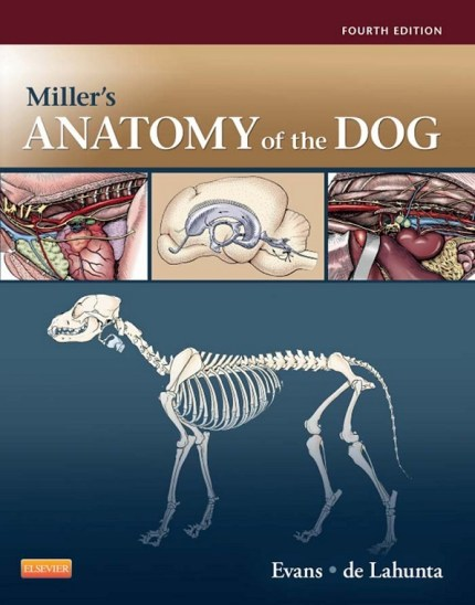 Miller's Anatomy Of The Dog Book PDF