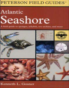A Field Guide To The Atlantic Seashore