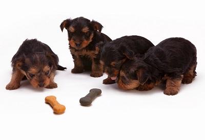 Raw Dog Food