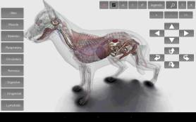 3D Dog Anatomy Android App 3