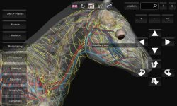 3D Horse Anatomy Android App 02