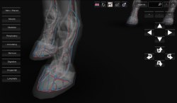 3D Horse Anatomy Android App 07