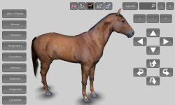 3D Horse Anatomy Android App