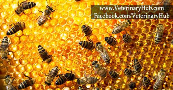 Species Of Bee