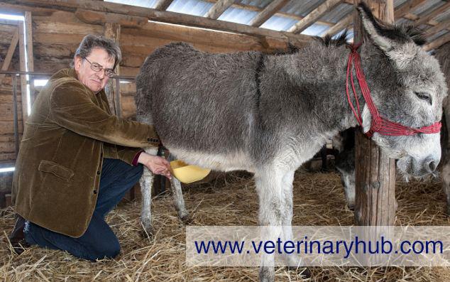 Donkey Milk Cheese