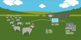 Silent Herdsman Monitoring System
