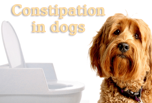 Best Remedies For Constipation in Dogs