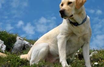 Protozoan Diseases in Dogs