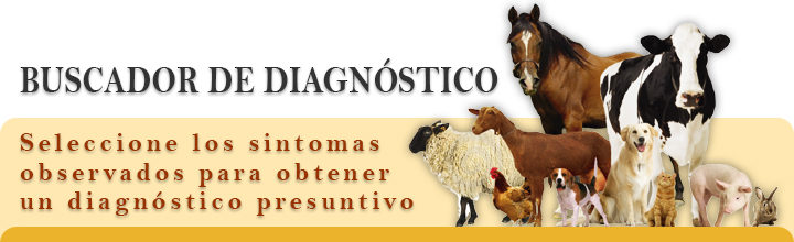 Buscador de Diagnóstico