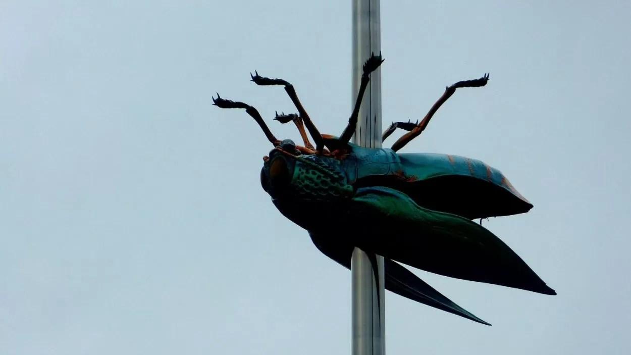 Leuven mier