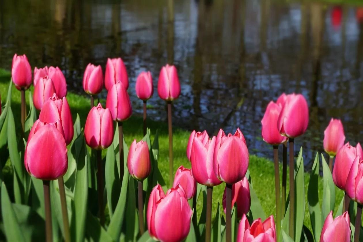 De leukste uitstapjes in Nederland in de lente