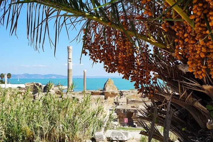 Vetexbart in Carthago Tunesië ruine